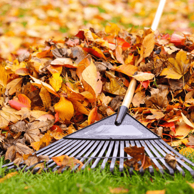 fall lawn care, remember to rake your leaves