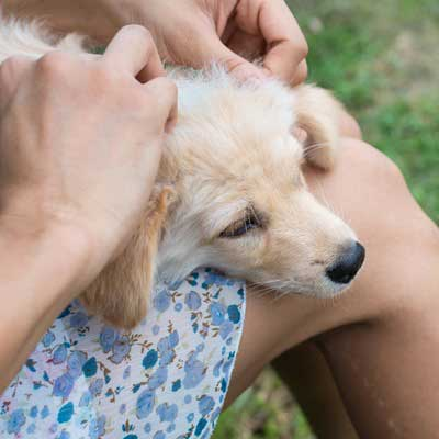 prevent flea and ticks from pets
