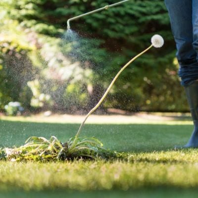 Weed control will prevent weeds from spreading in Mount Laurel, NJ