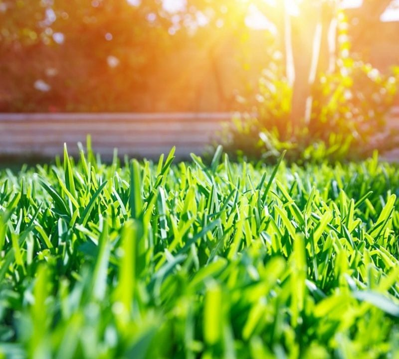Our summer lawn care tips will help you boost the health and beauty of your Cherry Hill, NJ lawn this summer.