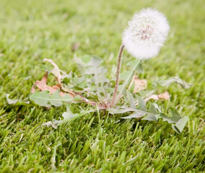 Get rid of ugly weeds from your lawn