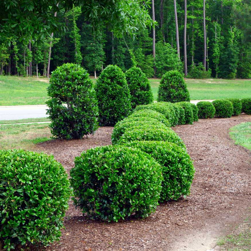 Tree care service, shrub fertilization from the pros at Environmental Turf Management