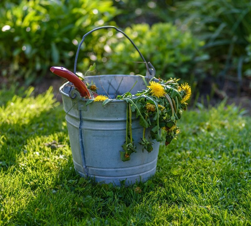 prepare your lawn for spring by weeding