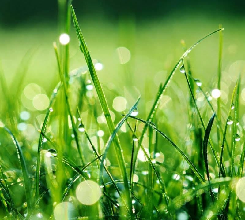 If you're looking for some DIY irrigation methods, then Environmental Turf Management has the tips for you to keep your grass watered and healthy all summer long.