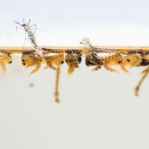Mosquitoes lay their eggs in standing water, so remove standing water from your Snellville, GA property as an effective summer mosquito control technique.