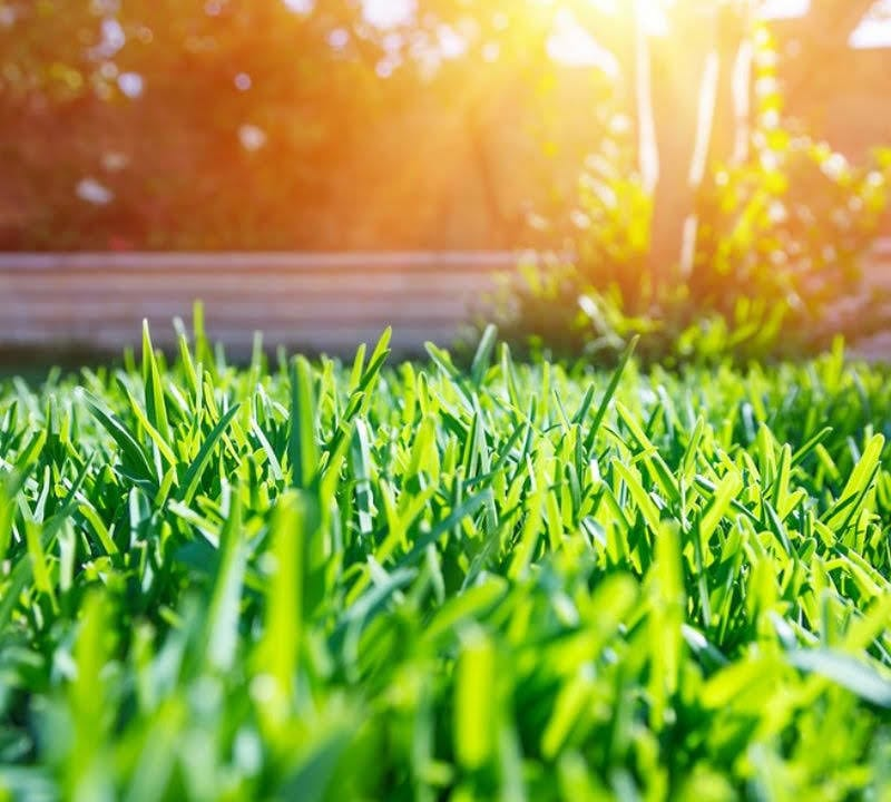 Our summer lawn care guide will help you get the most beautiful yard in Athens, GA.