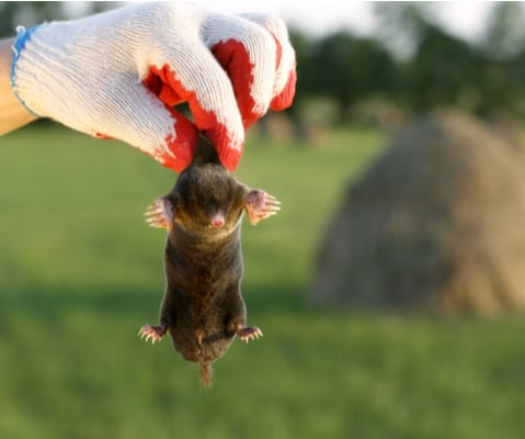 Humane rodent control will eradicate your issues