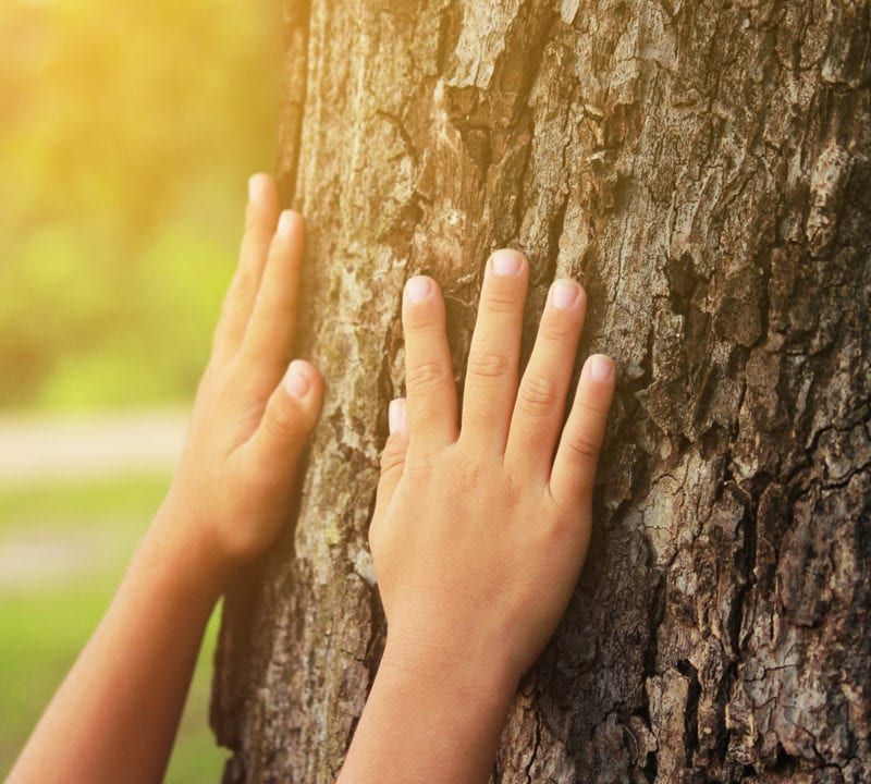 Give your Duluth, GA trees some love this summer with these essential summer tree care tips from Environmental Turf Management.