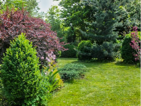 Tree fertilization for beautiful ornamentals