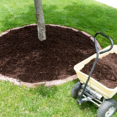 Summer tree care includes adding mulch around the base of your tree here in Duluth, GA.