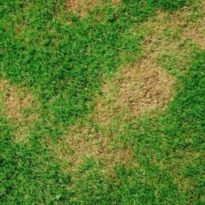Brown patch is one of the most common lawn fungus affecting Bethlehem, GA lawns.