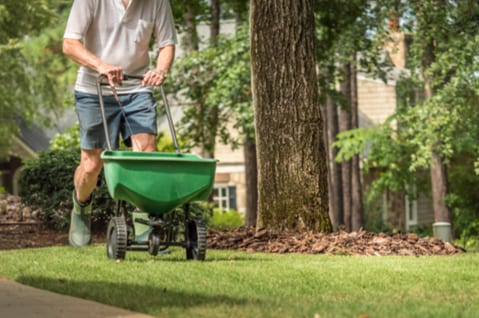 how to fertilize lawn