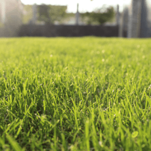 Giving the best green holiday gift of a weed-free lawn is easy with a lawn care program from Environmental Turf Management.
