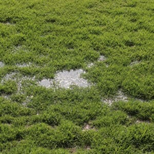 puddle of water on compacted soil