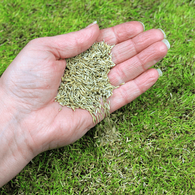 grass seed being spread by hand